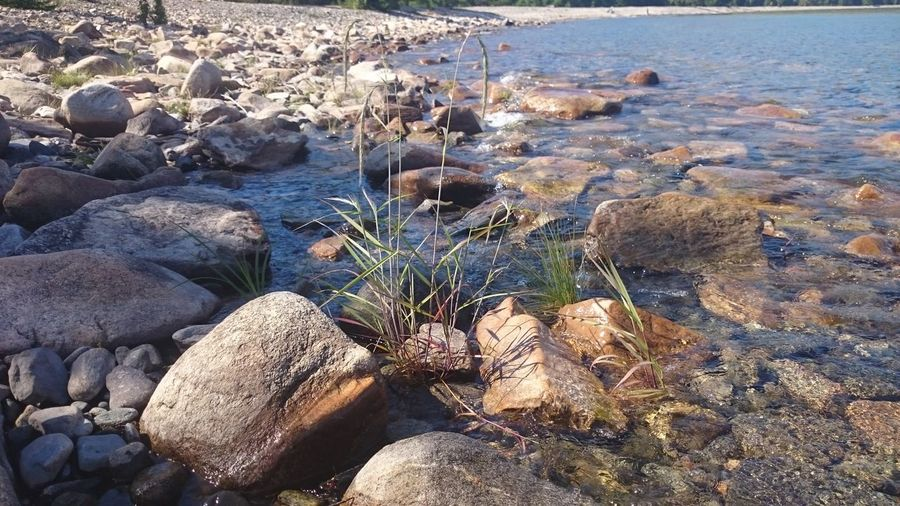 Water Sea Rock - Object Beach Nature High Angle View Tranquility Shore Non-urban Scene Tranquil Scene Scenics Beauty In Nature Pebble Stone - Object Rock Formation Seaweed Rocky Rock Plant Day