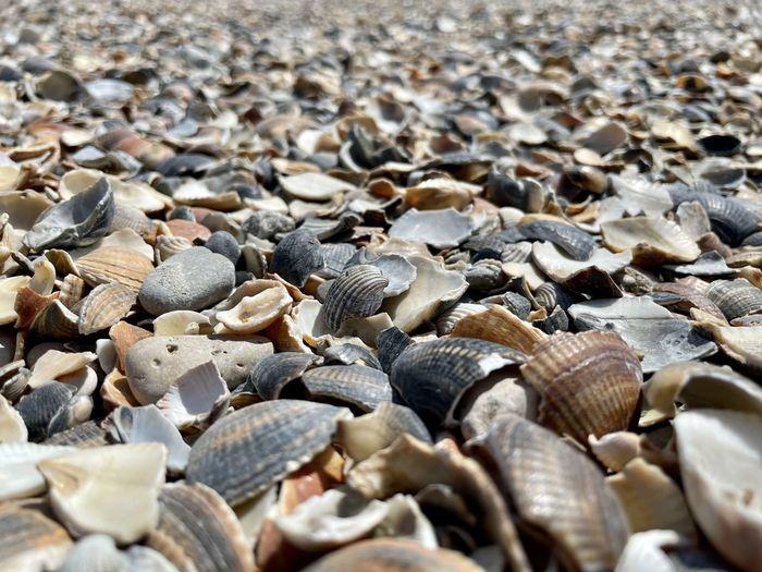 Full frame shot of shells on beach