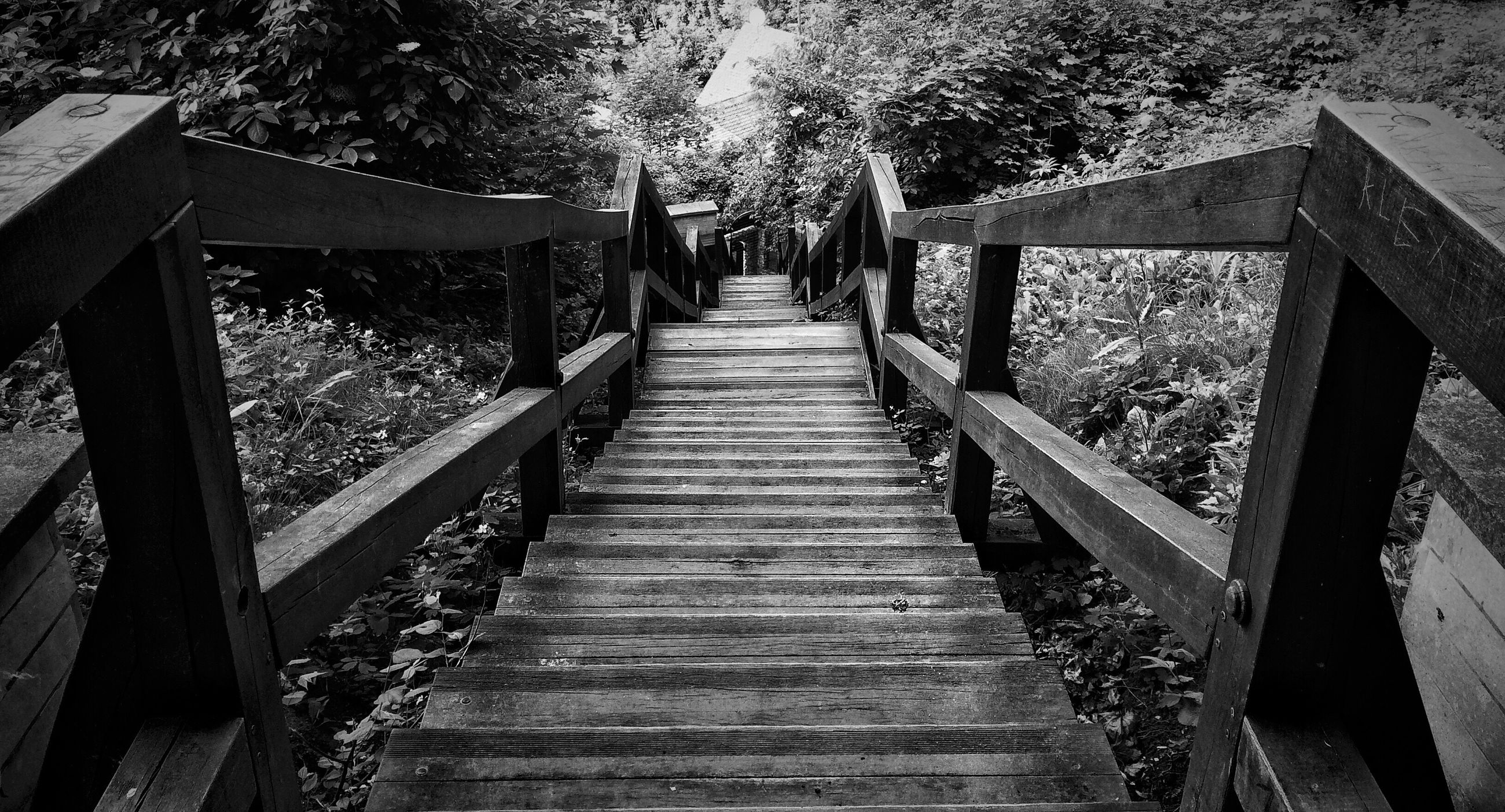 the way forward, railing, tree, steps, wood - material, built structure, steps and staircases, footbridge, staircase, architecture, diminishing perspective, nature, walkway, growth, boardwalk, wooden, tranquility, day, outdoors, sunlight