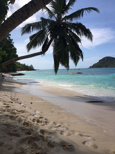 Hello World Hello Praslin Hello Seychelles Palm Tree Beach Sand Beauty In Nature Water Sky No People Wave Nature Taking Pictures Click Click 📷📷📷 Colorful Ocean Enjoying Life Colorsplash Traveling Exploring Bay Real Life Paradise Still Life Seychelles