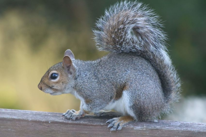 EyeEm Selects Full Length Eating Cute Side View Social Issues Close-up Squirrel
