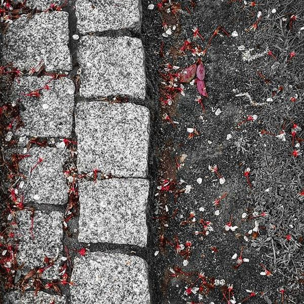 Nature Natureza Naturelovers Leafs Red Stone Spring Colorful Cores Colors Igersportugal Monocromatico Monochrome Monochromatic Blackandwhite Pretoebranco White Littleflower
