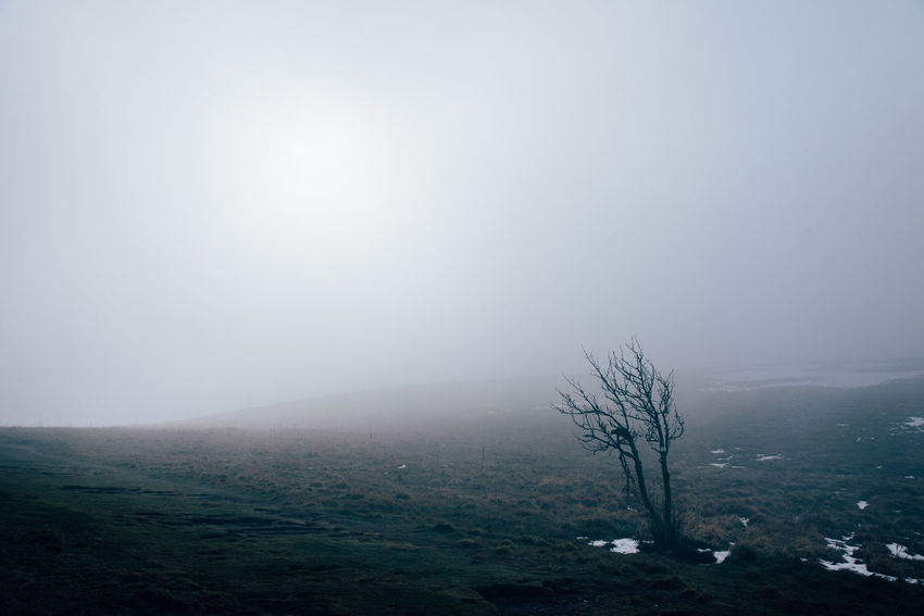 Fog Foggy Solitude Desert Weather Cold Temperature Sun Tree Winter Minimalism Mountain Countryside Landscape Beauty In Nature Environment Tranquility Scenics - Nature Sky Tranquil Scene Plant Nature No People Non-urban Scene Land Outdoors Remote Day