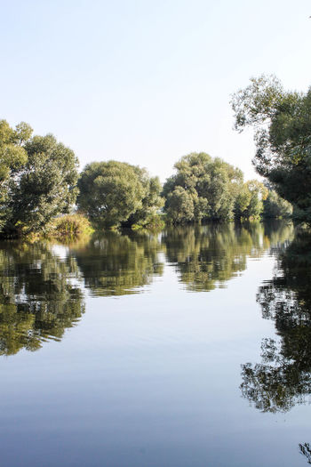 riverview Main Germany Riverview Reflection Tree Water Plant Tranquility Lake Sky Nature Tranquil Scene Beauty In Nature Waterfront Day Growth No People Scenics - Nature Clear Sky Outdoors Copy Space