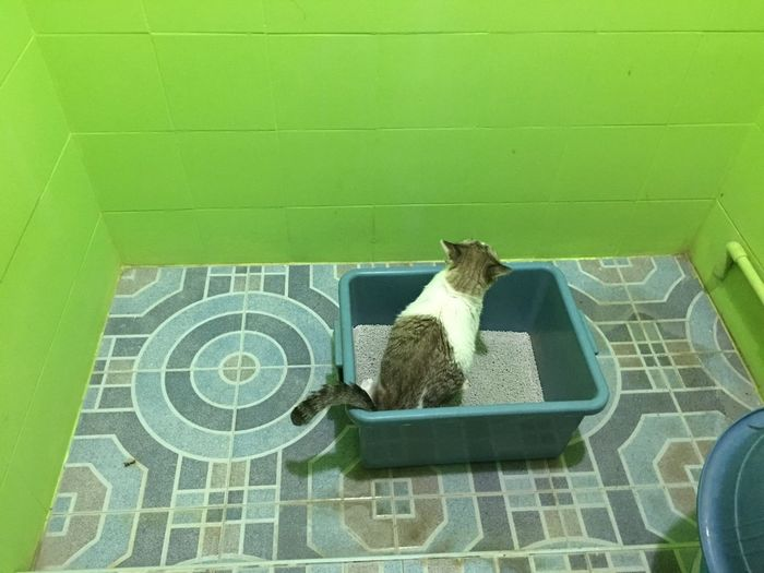 High angle view of cat sitting on tiled floor