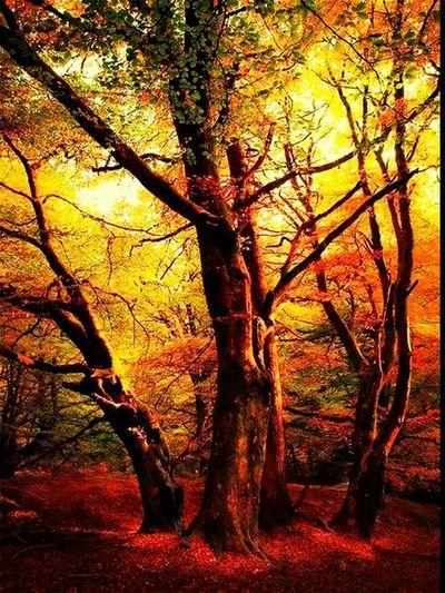 Boost Filter Colors Of Autumn Autumn Nature