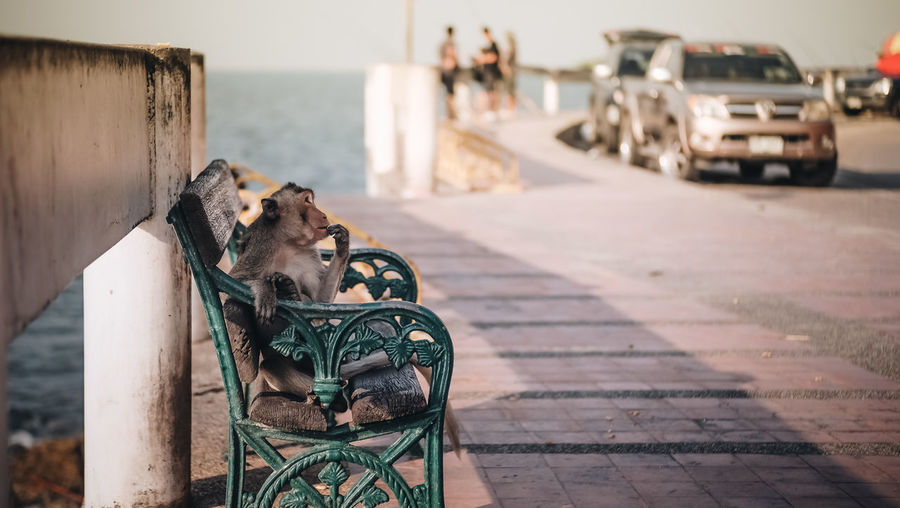 Primate Alone Chair Setting Animal Animal Wildlife Lonly Monkey