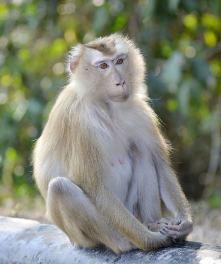 Portrait of monkey looking away while sitting outdoors