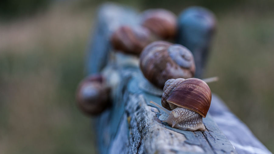 Close-Up Of Snail On Wooden Railing