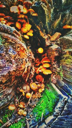 Everything has beauty. Nature Hiking Glacier Adventure Woods Beautiful Montana Nature Photography Beauty In Nature Lifeisbeautiful Glaciernationalpark Outdoors Enjoying Life Moss Mossporn Shrooms Mushrooms Life In Death Beauty Trees 406 Created