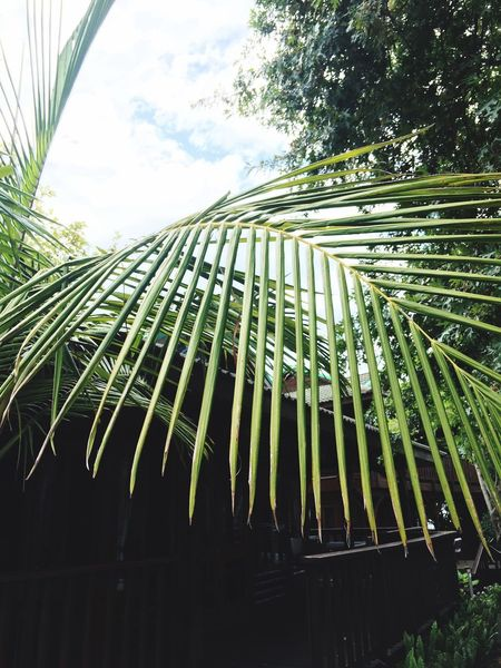 🌴🌴🌴 Tree Nature Green Closeup IPhoneography Photography Knysna Taking Photos Enjoying Life Hello World
