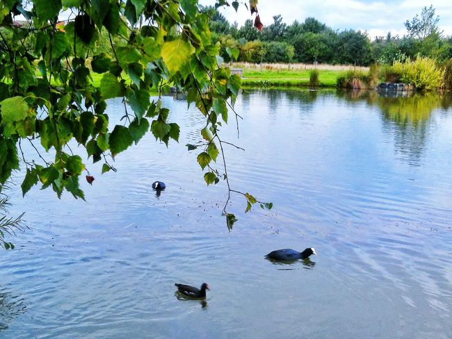 Holiday at the park Nature On Your Doorstep EyeEm Nature Lover Photooftheday Beautiful Nature Landscape_Collection Lakeside Duck At The Park