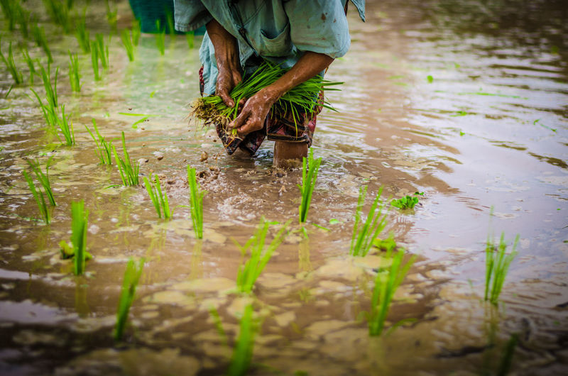 Water One Person Low Section Real People Working Nature Selective Focus Standing Plant Day Occupation Human Body Part Farmer Wet Adult Agriculture Farm Land Gardening Outdoors Mud Planting Farm Worker My Best Photo