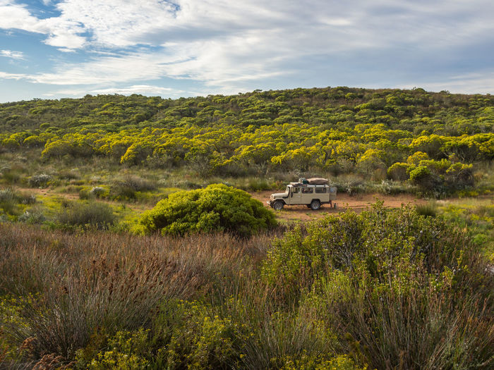 Classic 4x4 car on track with coastal vegetation at De Hoop Nature Reserve, South Africa 4wd 4x4 De Hoop Nature Reserve South Africa Travel Beauty In Nature Cloud - Sky Day De Hoop Field Garden Route Landscape Nature No People Outdoors Scenics Sky Tree
