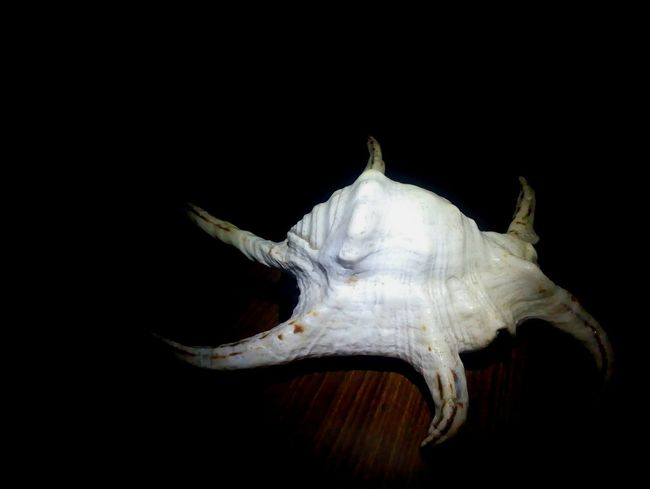 Sea Shells 🐚 Sea Shells Shells🐚 Light And Shadow Mobile Photography MotoE Moto Click Mobile Phone Photography Studio Shot Light Effects Studio Shoot Mobilephotography