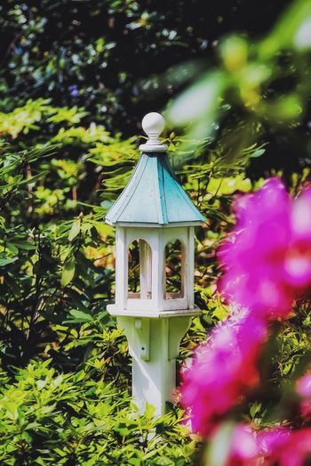 """Good afternoon Mr and Mrs Goldfinch. We have a lovely table waiting for you. It boasts a lovely view of the gardens."" 🤓🐦🤨 Sunshine Walking Around Taking Photos Blooming Springtime Fuchsia Nestled Azalea Verdant Birdhouse Plant No People Nature Growth Day Tree Outdoors Sunlight Beauty In Nature Green Color Flower"