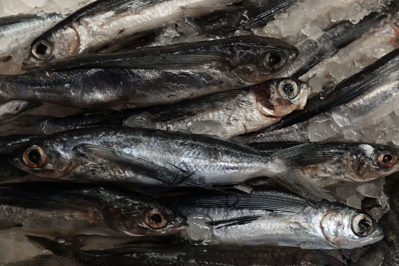 Backgrounds Close-up Cold Temperature Day Documentary Photography Fish Fish Market Food Food And Drink For Sale Freshness Full Frame Healthy Eating Ice Indoors  Market No People Photography Photography Themes Raw Food Retail  Seafood
