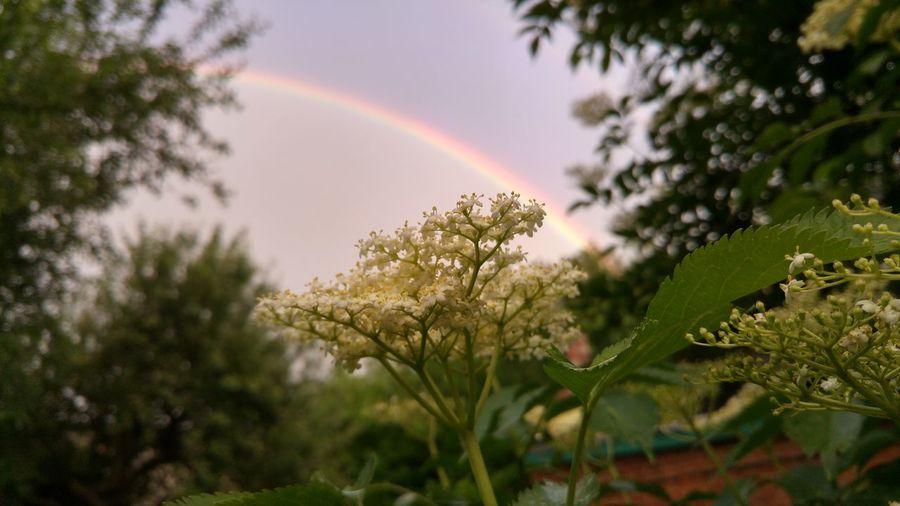Scenic view of rainbow over trees