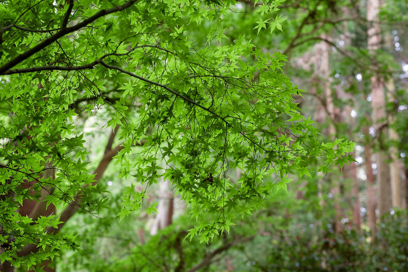 Low angle view of trees in garden