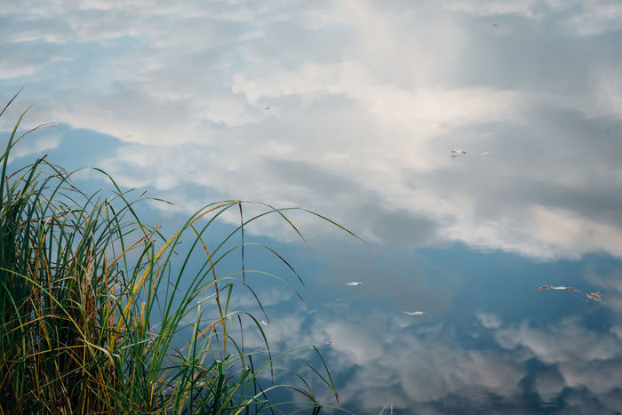 Dream Melancholic Reflection Romantic Beauty In Nature Cloud - Sky Day Growth Melancholy Nature No People Nostalgia Outdoors Plant Scenics Sky Tranquil Scene Tranquility Water