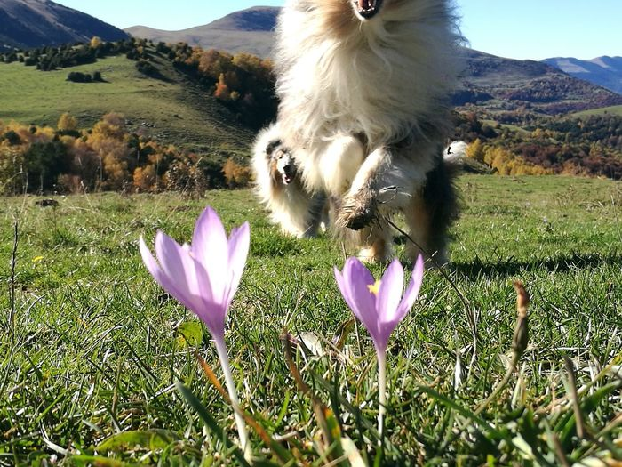 Flower Beauty In Nature Nature Flower Head Field Outdoors Fragility Purple Animal Themes Flower Beauty In Nature Nature Plant Growth Flower Head Field Outdoors Sunlight Petal Fragility Purple Day No People Freshness RoughCollie