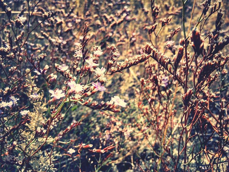 Tiny Flowers Nature Patterns Nature Geometry