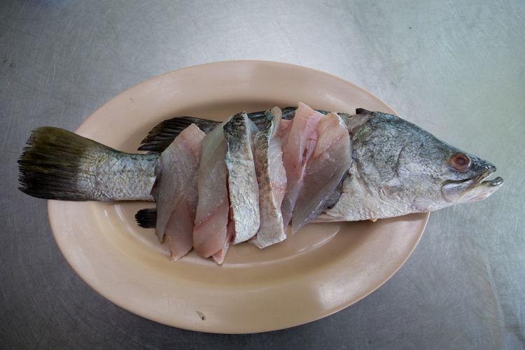 Fish Vertebrate