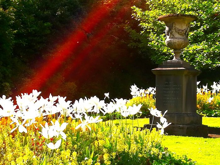 monochrome red rainbow over a park memorial ;) Red Rainbow Red Glare Effect Red Glare Memorial Stone Memorial Stone Ornament Tulip White Tulips Formal Garden Formal Planting Tall Tulips Bird Water Animal Themes Plant