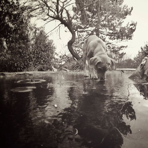 walking on water - practice Reflection Getting Inspired Low Angle View Companion Canine Animal Outdoors Monochrome Black And White Blackandwhite Water Ice My Dog Dog