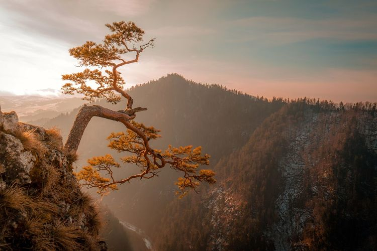 Scenic View Of Tree Mountains Against Sky At Sunset