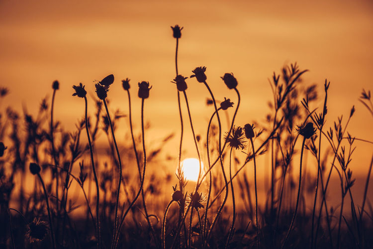 Close-up of flowering plants on field against sunset sky