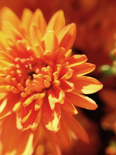 Nature. Nature Beautiful Flower Zoomthelife Orange Zoom Microcam Micro