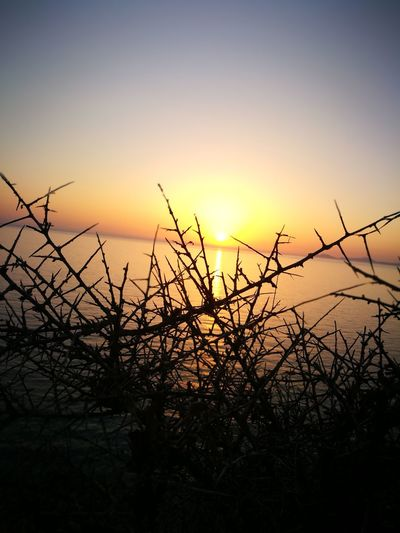 Tramontoalghero Tramonto Alghero Sole Sunset Silhouette Sky Tree Sun Outdoors Nature Plant Beauty In Nature