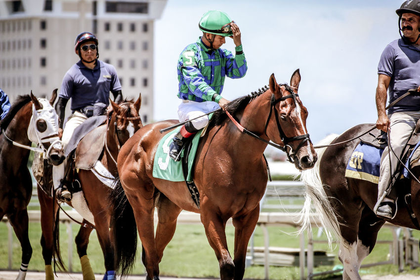Gulfstream Horse Life Horses Racing Animal Equestrian Equine Equine Photography Horse Horse Photography  Horse Racing Horse Riding Horseback Riding Jockey Thoroughbred