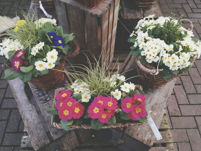 Flowers Edensor