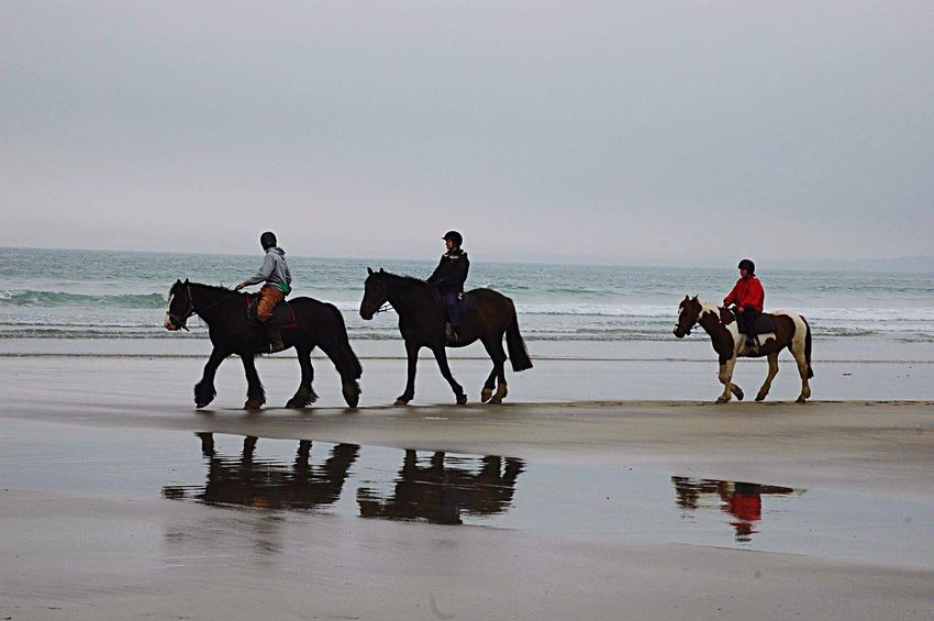 Pembrokeshire Horses Horse Riding I Love Horses Sea And Sky Seascape Seaside
