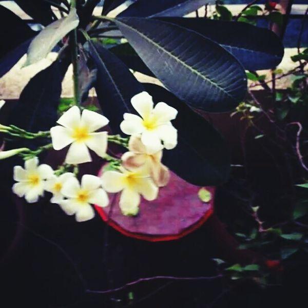 Truebeauty Flowers, Nature And Beauty Purehipstamatic Relaxing Relaxedmindbodyandspirit