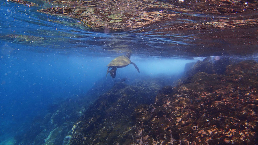 View Of Turtle Underwater