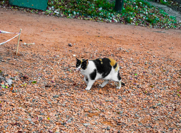 A beautiful stray calico cat living in a park. Animal Animal Themes Cat Day Domestic Domestic Animals Domestic Cat Feline High Angle View Land Leaf Mammal Nature No People One Animal Pets Stray Stray Animal Stray Cat