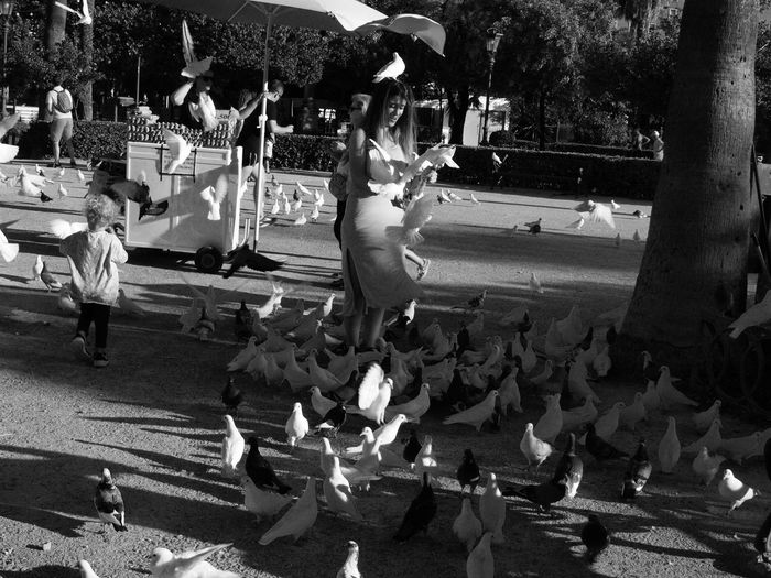 Bird Crowd Day Large Group Of Animals Large Group Of People Leisure Activity Lifestyles Men Nature Outdoors People Real People Sitting Tree Water Women