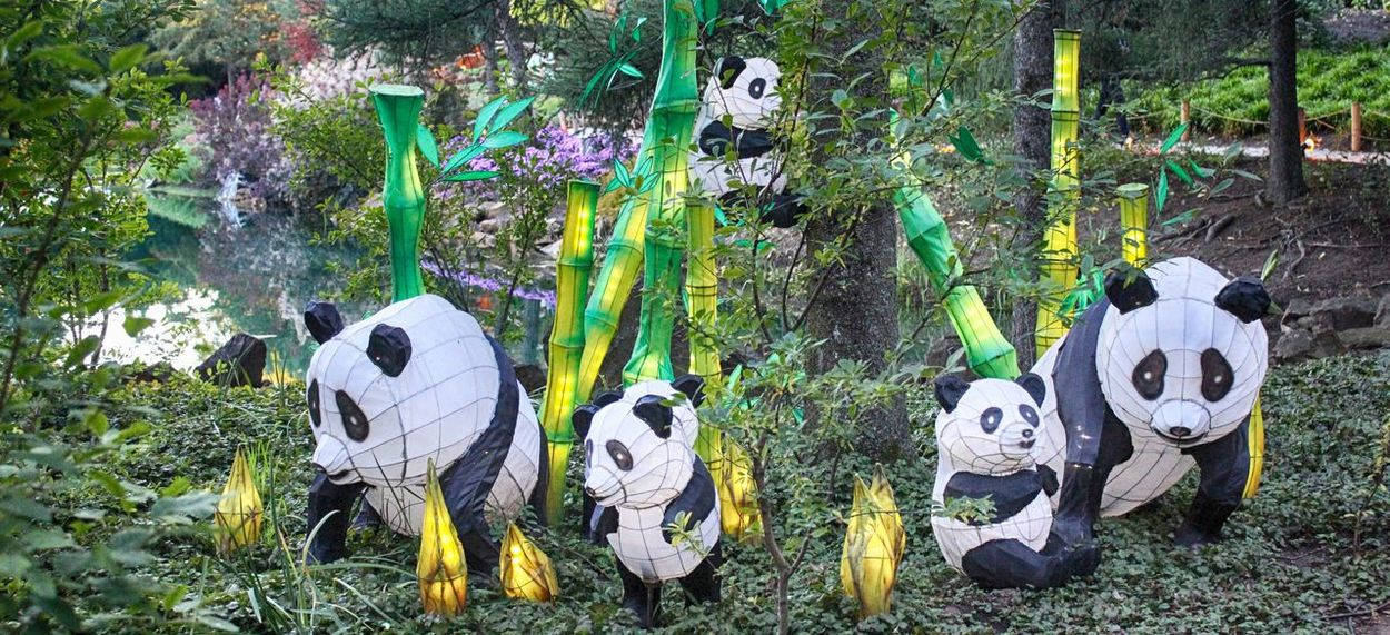 Chinese Lanterns Conformity Creativity Day Event Front View Grass Man Made Object Multi Colored No People Outdoors Panda Tree Trunk