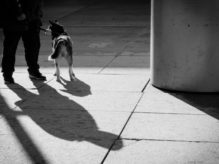 best buddy Streetphoto_bw Street Companion Buddy Loyalty Streetphotography People Pets Low Section Dog Shadow Sunlight