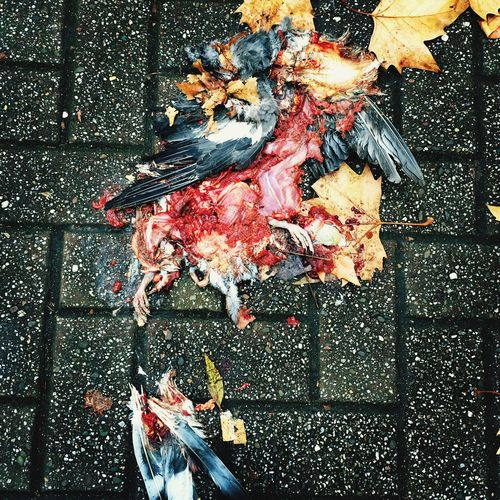 A dead bird on