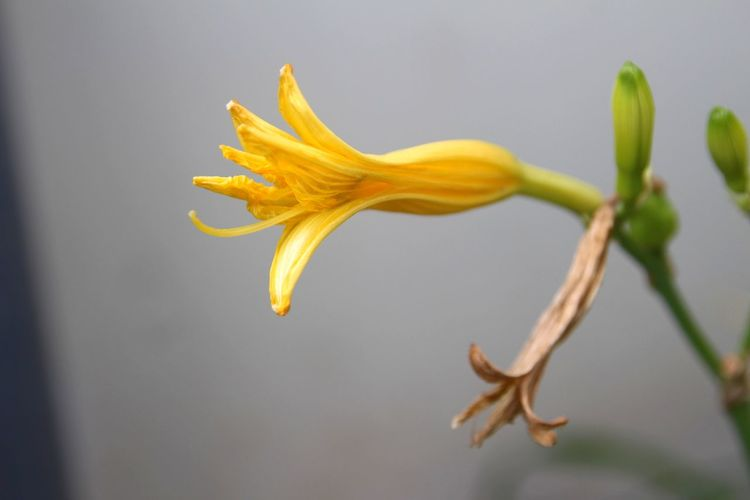 Close-up of wilted flower against blurred background