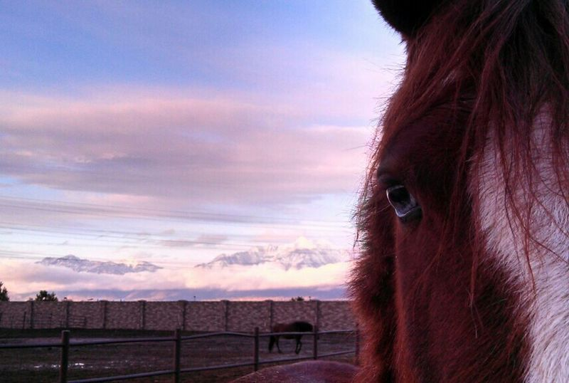 Horse Horses Blue Sunset