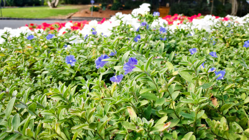 Beauty In Nature Flower Flower Head Flowerbed Flowering Plant Freshness Garden Growth Multi Colored Nature Plant Springtime