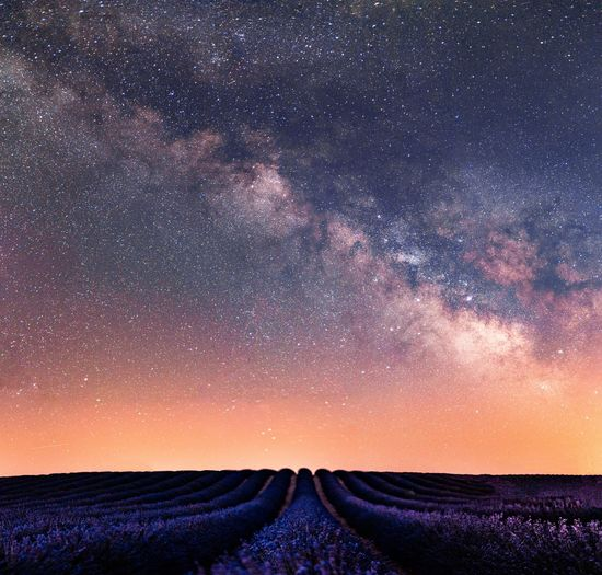 Scenic view of lavender farm against star field in sky