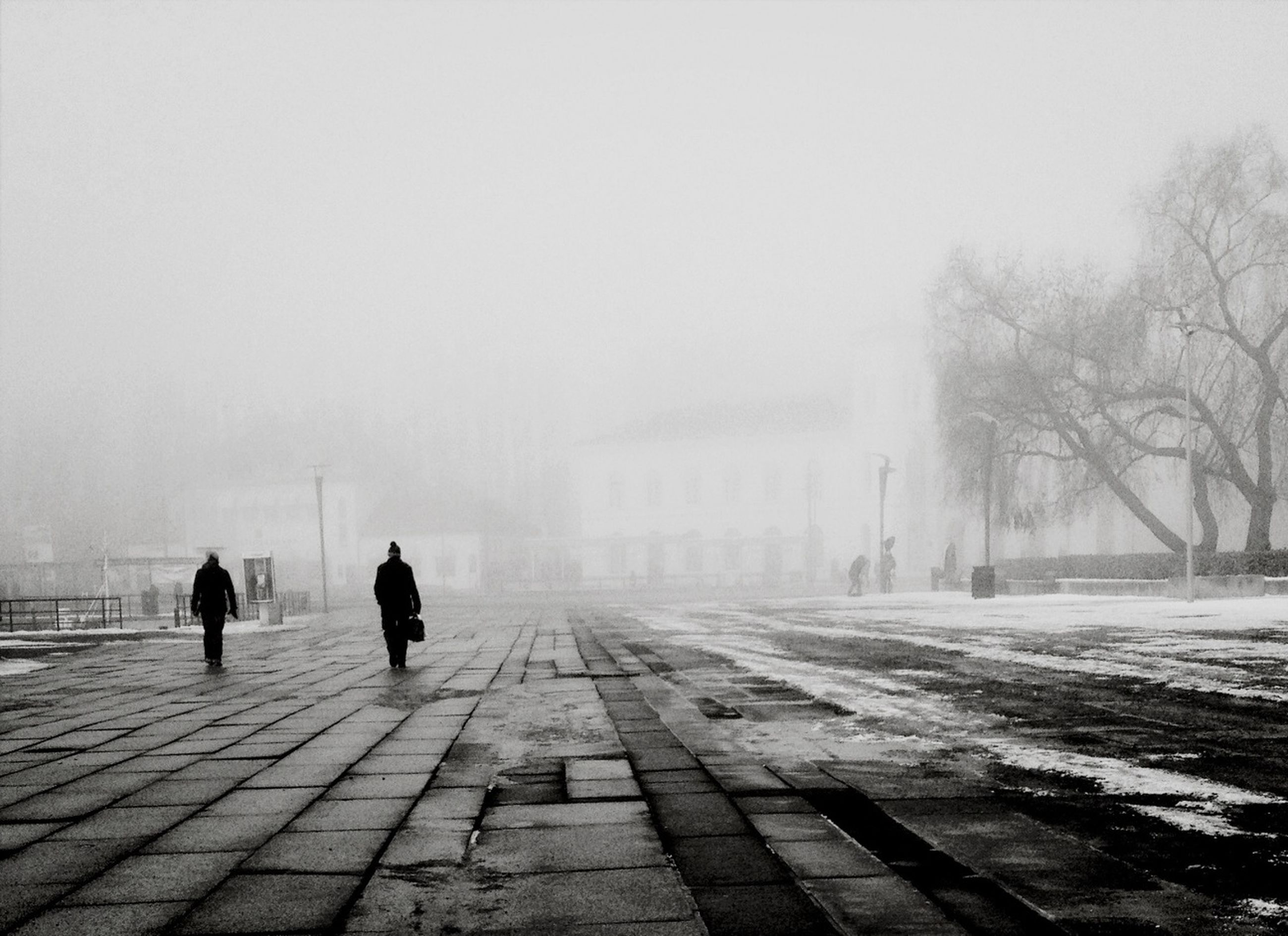 fog, walking, full length, weather, men, rear view, the way forward, foggy, lifestyles, tree, silhouette, person, street, season, leisure activity, transportation, winter