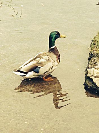 Quack quack Enjoying The Sun Park
