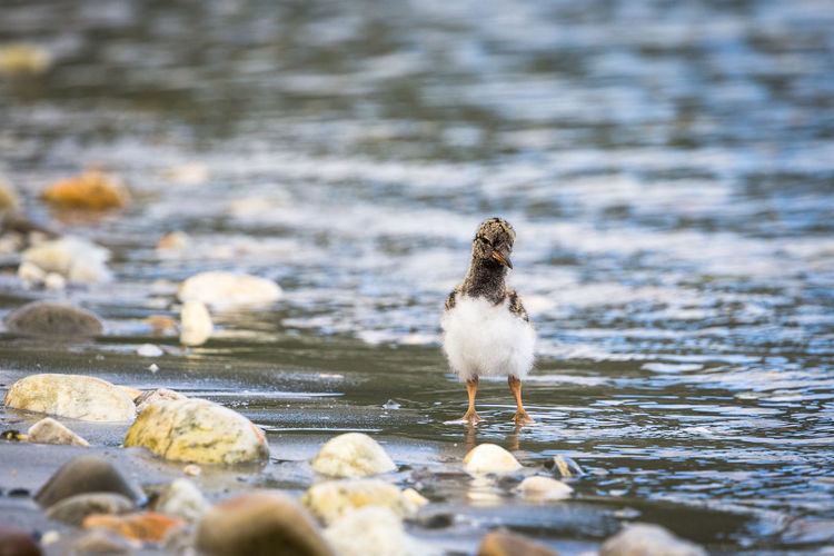 Close-up of young bird at lakeshore